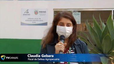 Photo of Adapar altera prazo para cadastro anual de rebanho; vídeo
