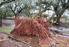 Photo of TV Carajás mostra estragos do 'ciclone bomba' em C. Mourão e cidades vizinhas. Assista