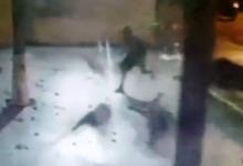 Photo of Bandido corre atrás de pavão e furta animal de escola de Londrina; VEJA